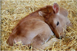 Adorable Calf.